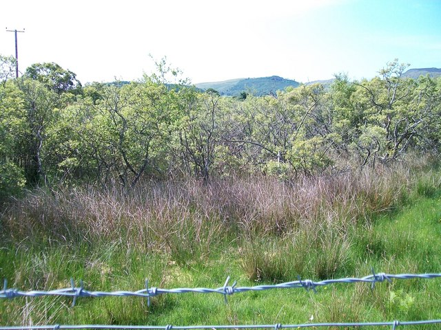 Wooded wetland opposite Ty'n Lon farmhouse