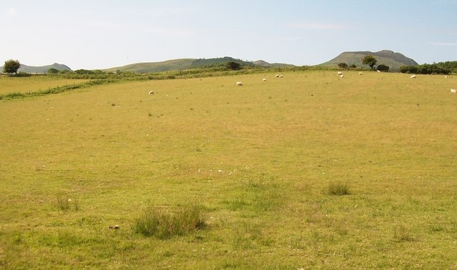 Sheep pastures south of the lane