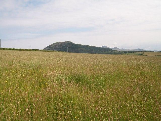 Hay meadow at Mochras