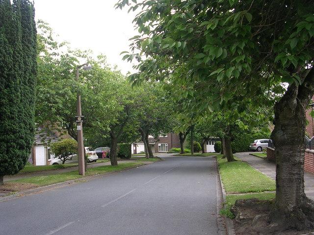 Yew Tree Avenue - Pearson Lane