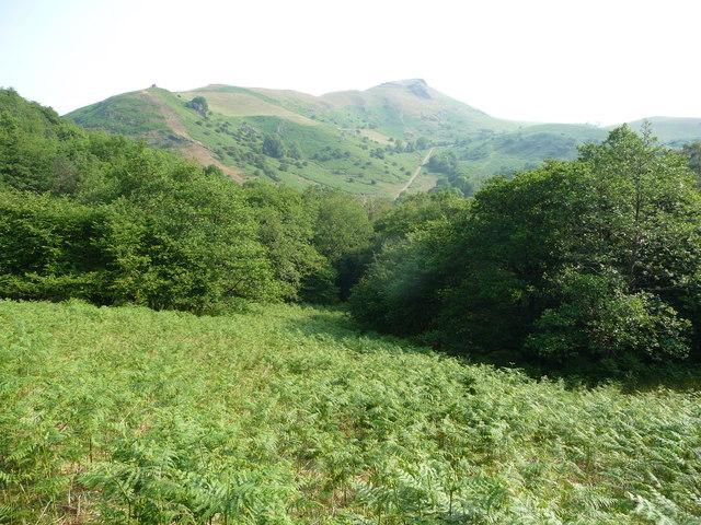 Bracken and woodland between Helmeth Hill and Caer Caradoc