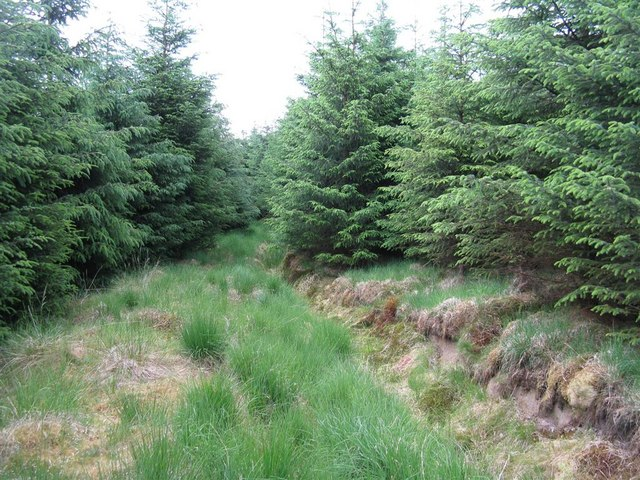 Drainage channel in Craighaugh Forest