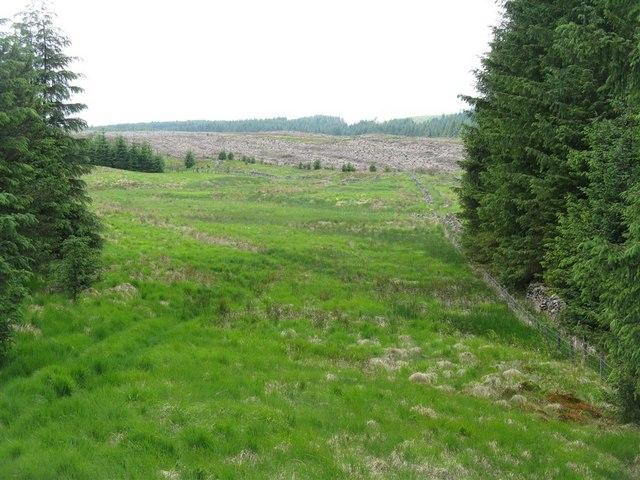 Craighaugh Forest