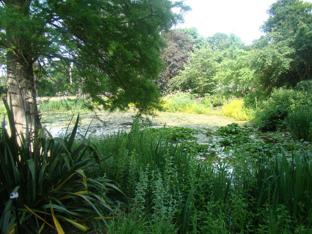 Pond in Kew Gardens