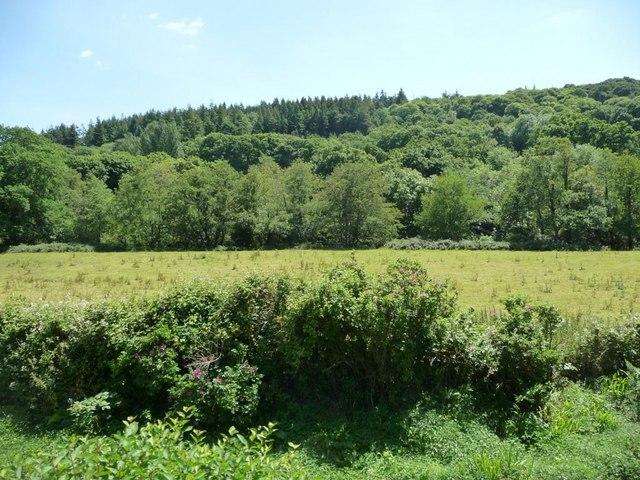 Riverside meadow with North Wood behind