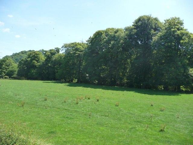 Field alongside the River Dart