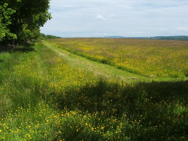 Field beside Chacefield Wood
