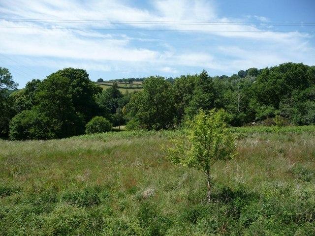 Grassland and trees alongside the Dart