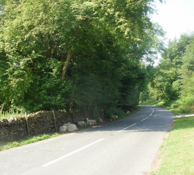 Shady Sheep, Bream Road