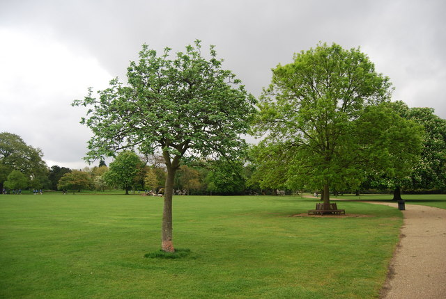 Trees, Dulwich Park