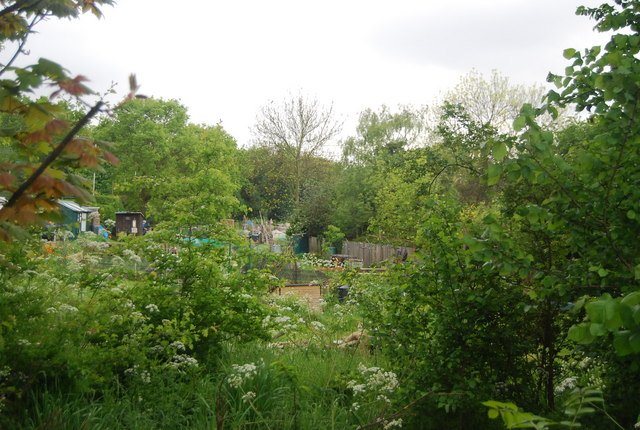 Allotments off Dulwich Common (A205)