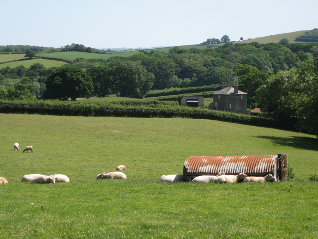 Borough Cottage beyond a field of sheep