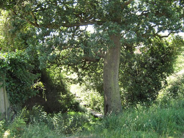 Below the Oak tree