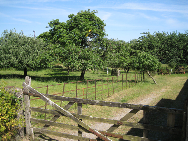 Orchard, Lower Wotton