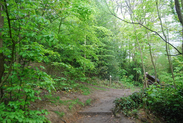 Path in Sydenham Hill Wood Nature Reserve