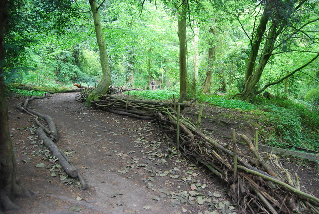 Coppiced fencing, Sydenham Hill Wood