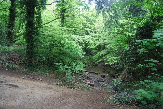 Pond, Sydenham Hill Wood Nature reserve