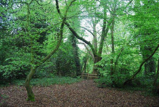 Sydenham Hill Wood