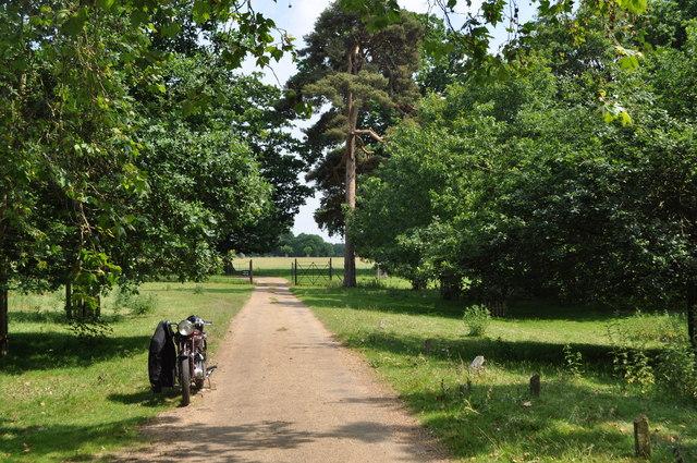 Track through Gunton Estate