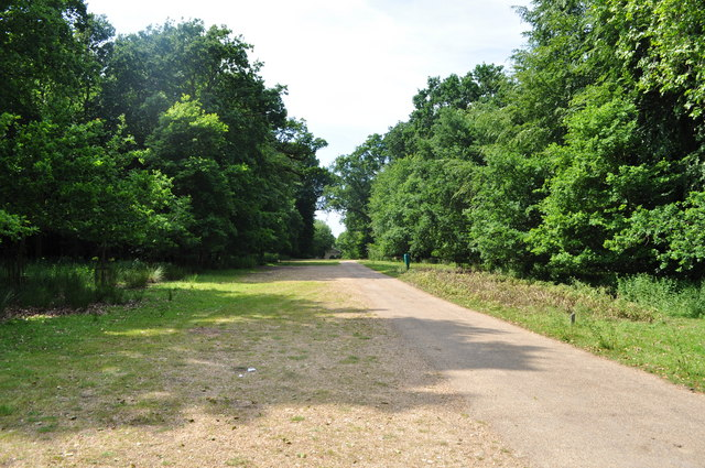 Track through the Gunton Estate
