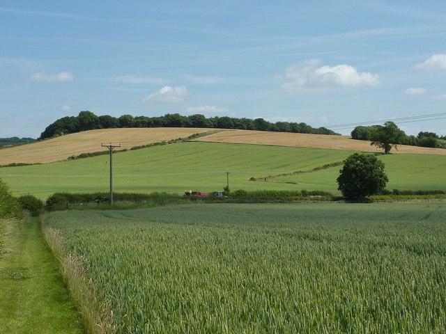 Woods and fields near Barlow