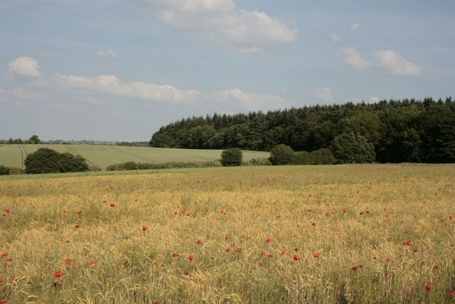 The north-east corner of Badby Wood - poppies