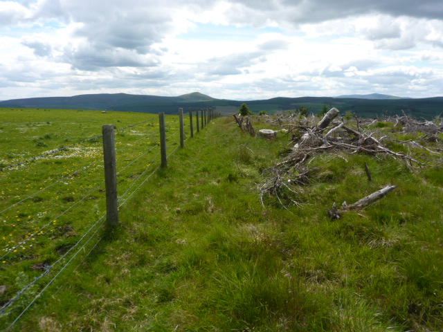 Fence between forestry and field near top of Hill of Bogairdy