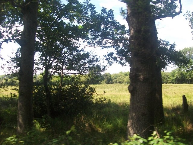 Woodland and rough pasture between Penrhos and Pwllheli