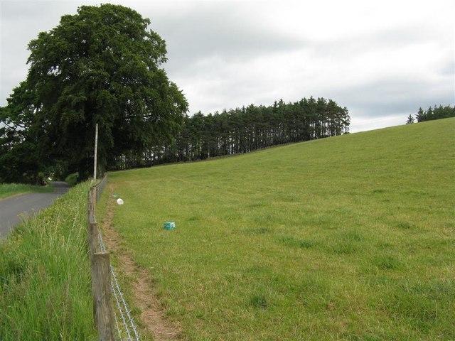 Roadside pasture near Newbigging