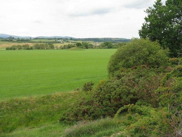 Grassland in Annandale