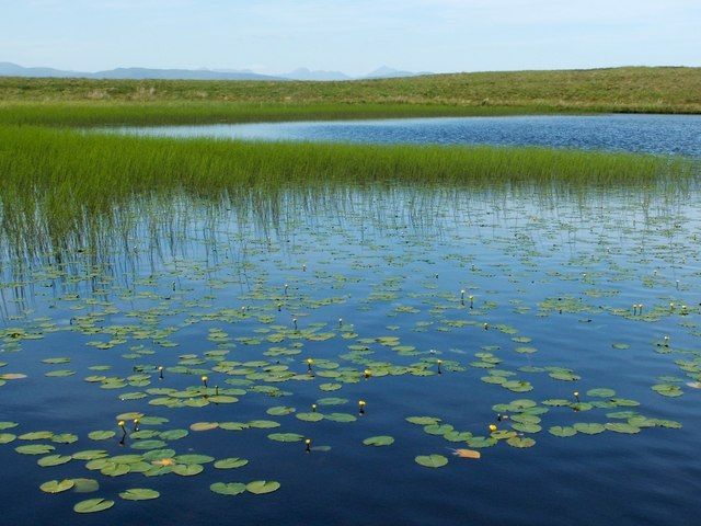 Water-lilies in the Lily Loch