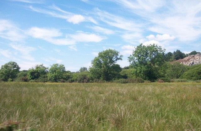 Marshland near Pont Garreg-fach