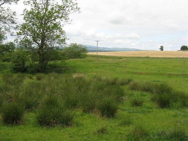 Farmland above Wamphray Mill