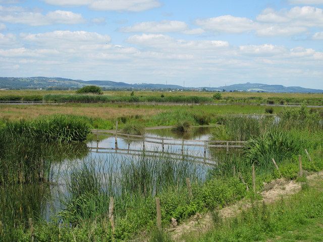 Wetland from the Zeiss Hide, Slimbridge