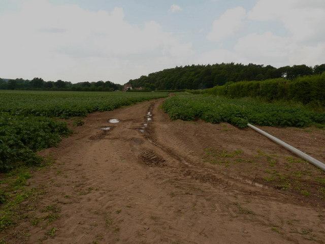 Irrigation equipment in a potato field near Tong
