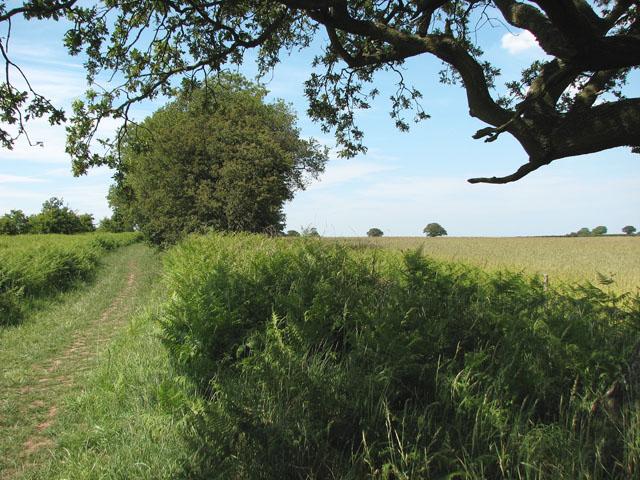 Ripening barley east of the Peddars Way