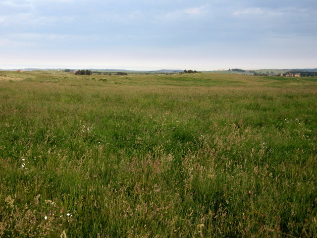 Meadowland in Lindisfarne National Nature Reserve