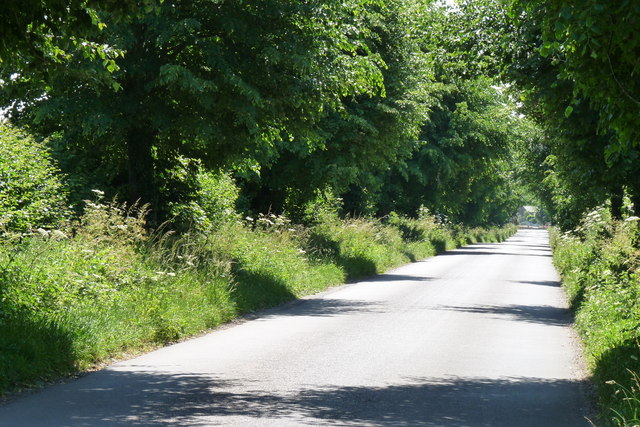The Road to Lower Bockhampton, Dorset
