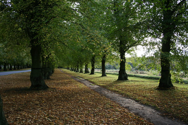 Lime Tree Avenue, Clumber Park, Nottinghamshire