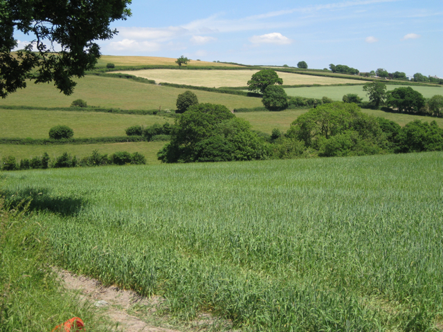 Wheatfield by the Kester Brook: 1