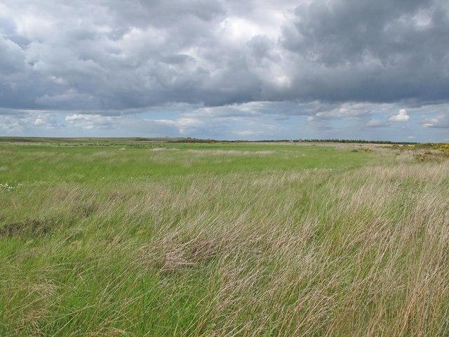 Dhuloch near Newtonhill