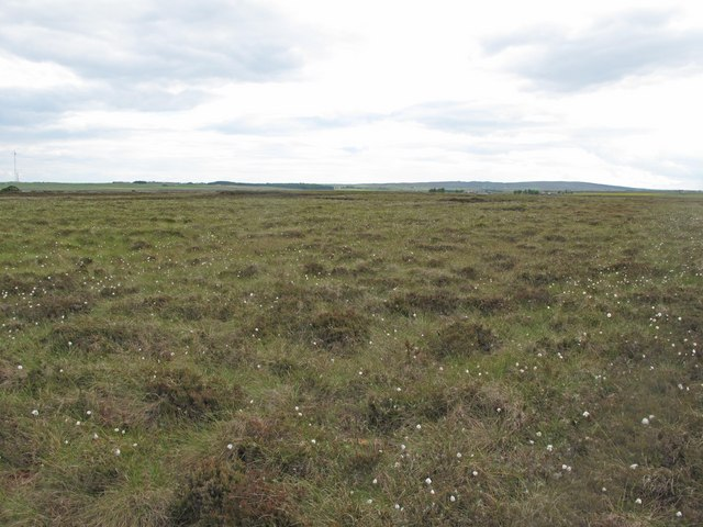 Peatland near Loch Hempriggs