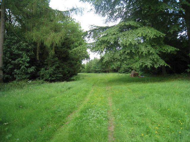 Ride in Hendale Wood