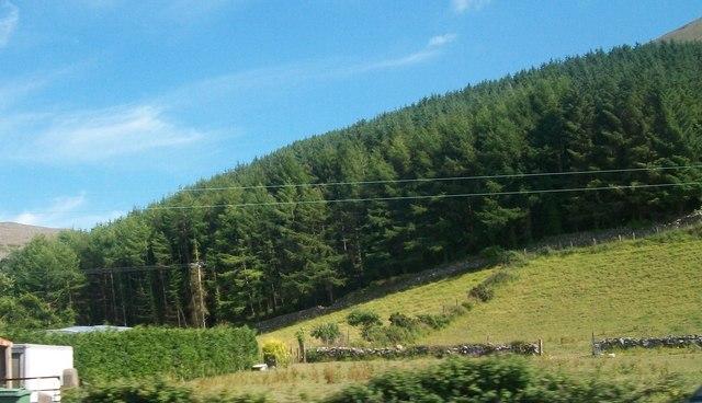 Woodland behind the hamlet of Gyrn Goch
