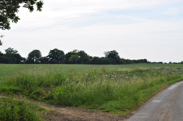 Copse to the West
