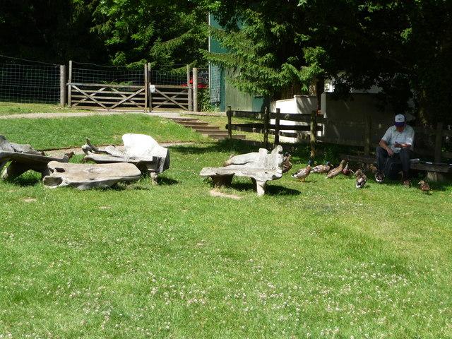 Canonteign Falls : Benches & Duck Feeding
