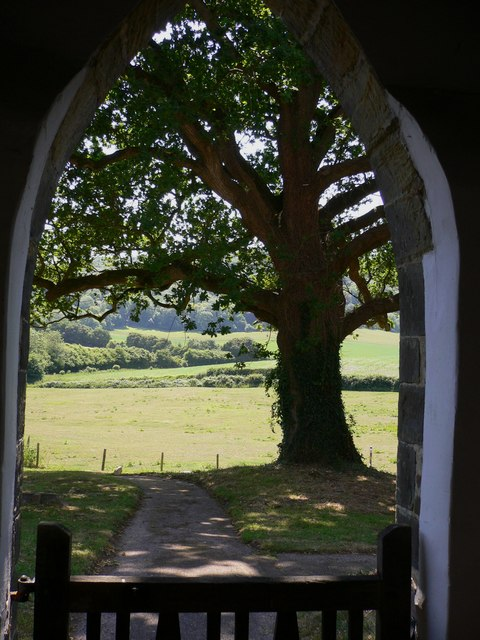 Churchyard tree