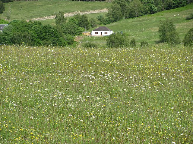 Hay meadow, Bohuntinville