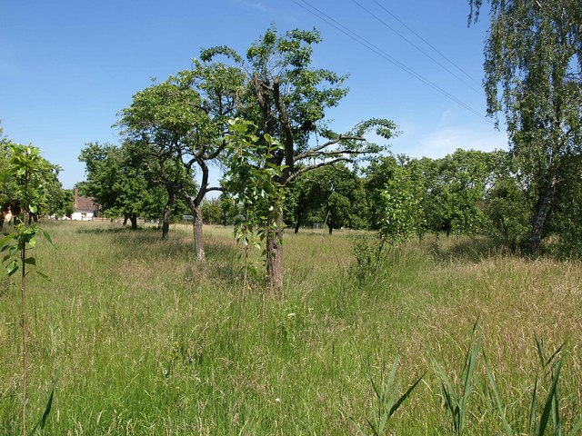 Orchard, Downend