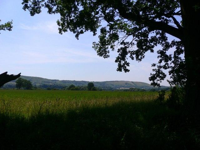 Field by Minching Lane